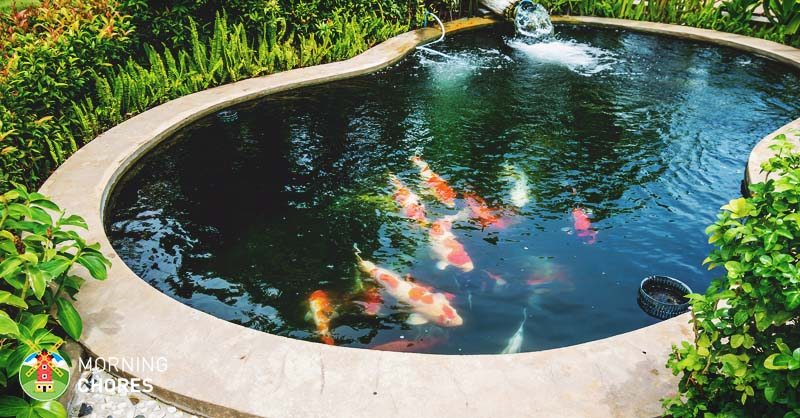 Building Backyard Ponds 8 big reasons to build backyard ponds to improve your home
