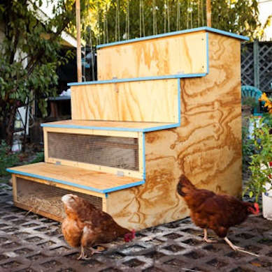 This Coop Is Actually Very Brilliant If You Dont Have A Lot Of Room To Dedicate Your Chickens Or Their Then Might Need Get Creative