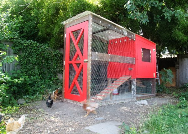 The Small And Friendly DIY Chicken Coop