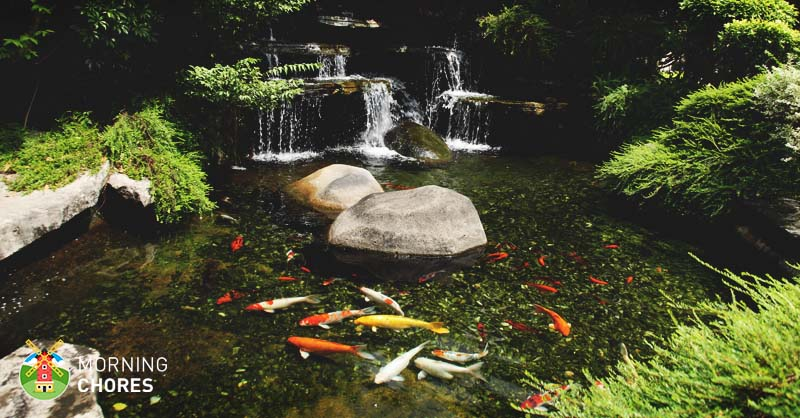 6 best pond pumps high quality pond fountain and for Small pond setup