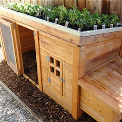This Chicken Coop Is Amazing. It Has Enough Room For You To House A Few Backyard  Chickens, And It Also Looks Simple Enough To Build.