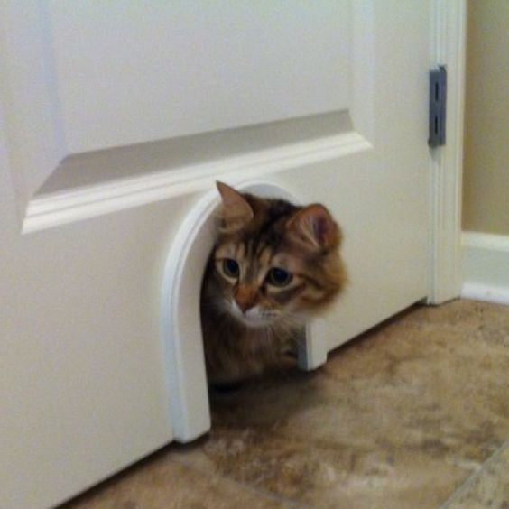 This Idea Is For All Cat Lovers Out There. It Would Work In Any Room, But I  Store My Litterbox In Our Laundry Room. I Have A Couple Of Indoor Cats That  ...