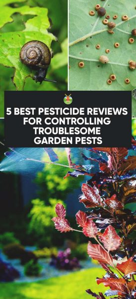 5-Best-Pesticide-Reviews-for-Controlling-Troublesome-Garden -Pests-PIN-273x600.jpg