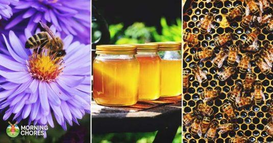 How Honey is Made: 9 Impressive Steps Honeybees Make Honey
