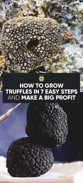 How Big Do Money Trees Grow