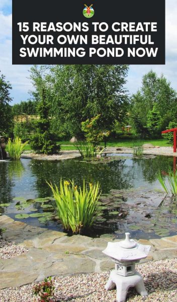 15 Reasons To Create Your Own Beautiful Swimming Pond Now