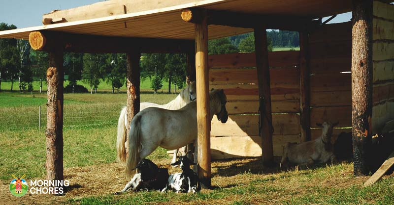 23 Inspiring Goat Sheds Shelters That Will Fit Your Homestead