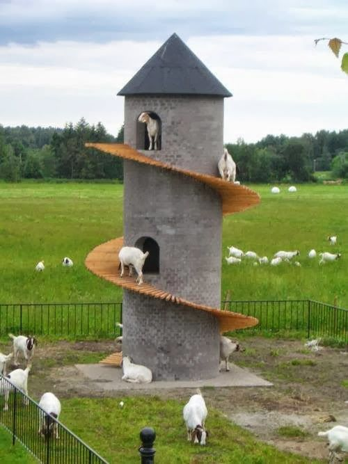 This Tower Looks Like A Lot Of Fun For Goat It Also Appears To Have An Opening At The Top So Could Be Used As Shelter