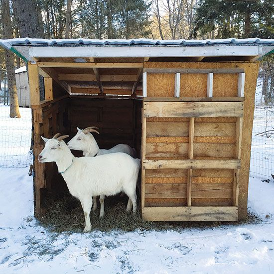The DIY Goat Shelter