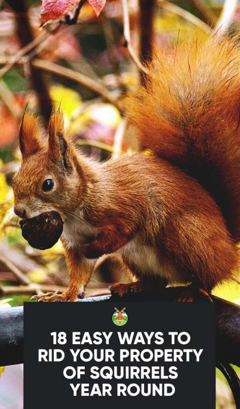 18 Easy Ways To Get Rid Of Squirrels From Your Property