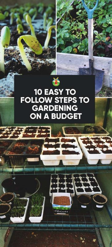 Charmant Do You Garden On A Tight Budget? If So, How Do You Do It? If You Are  Looking To Garden A Little Cheaper This ...