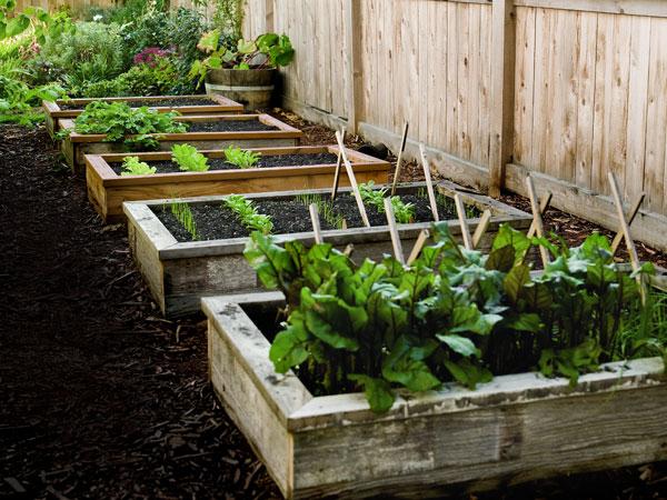 benefits of raised bed gardening - Raised Beds Garden