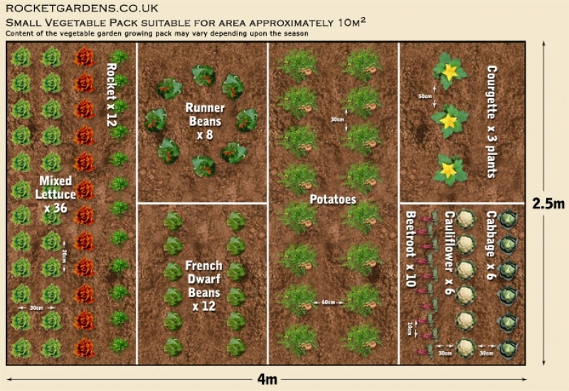 19 vegetable garden plans layout ideas that will inspire you for Small backyard vegetable garden design