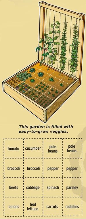 If You Want To Grow A Smaller Garden Then Might Consider This Method Have One Raised Bed