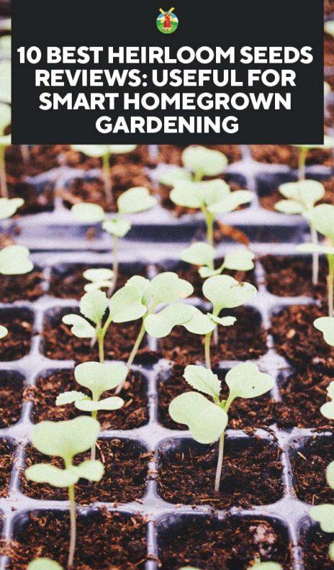 10 Best Heirloom Seeds Companies For Smart Homegrown Gardening
