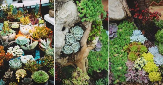 100 Succulent Garden Ideas for Uniqueness and Intrigue in Your Garden