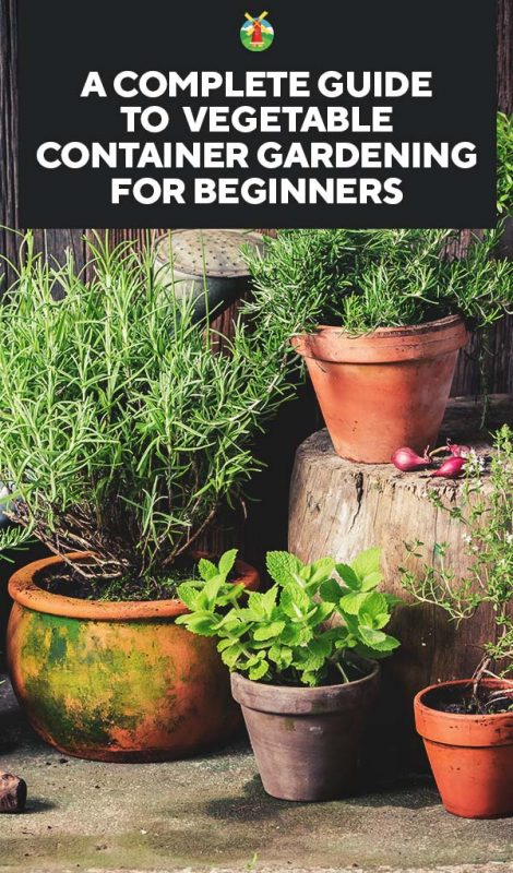 But There Are Things You Need To Understand When Deciding To Container  Garden. Here Is What You Need To Know To Grow A Container Garden  Successfully: