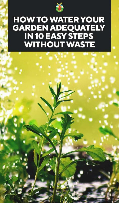 Watering your plants how often when to do it and 10 - How often should you water your garden ...