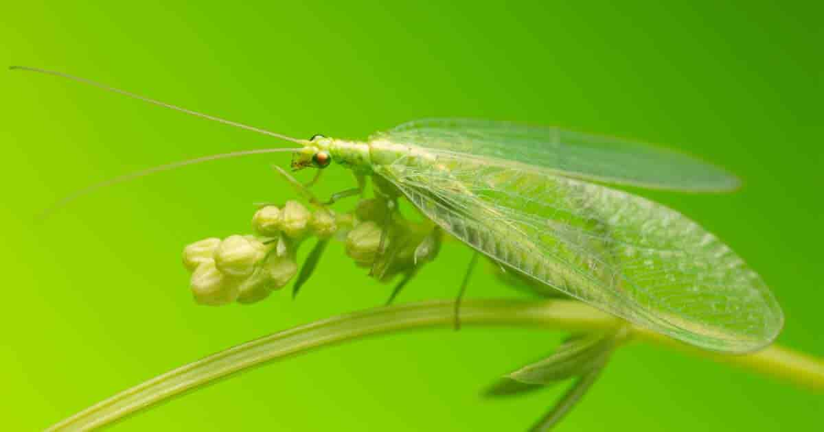 22 Beneficial Insects to Protect Your Garden and How to ...