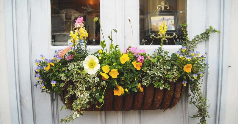 8 tips to make your window box flourish and 11 ideas to inspire you