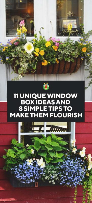 8 tips to make your window box flourish and 11 ideas to inspire you. Black Bedroom Furniture Sets. Home Design Ideas