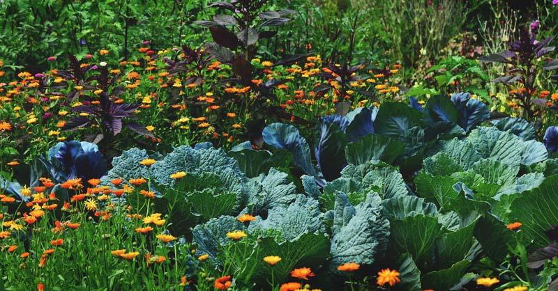 Edible landscaping how to start a beautiful perennial plot for food edible landscaping how to start a beautiful perennial plot for food supply mightylinksfo
