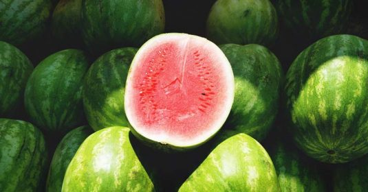 Growing Watermelon: Your Guide to Plant, Grow, and Harvest Watermelon