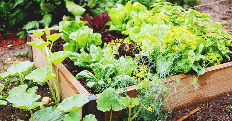 how to use the core gardening method to grow with minimal water