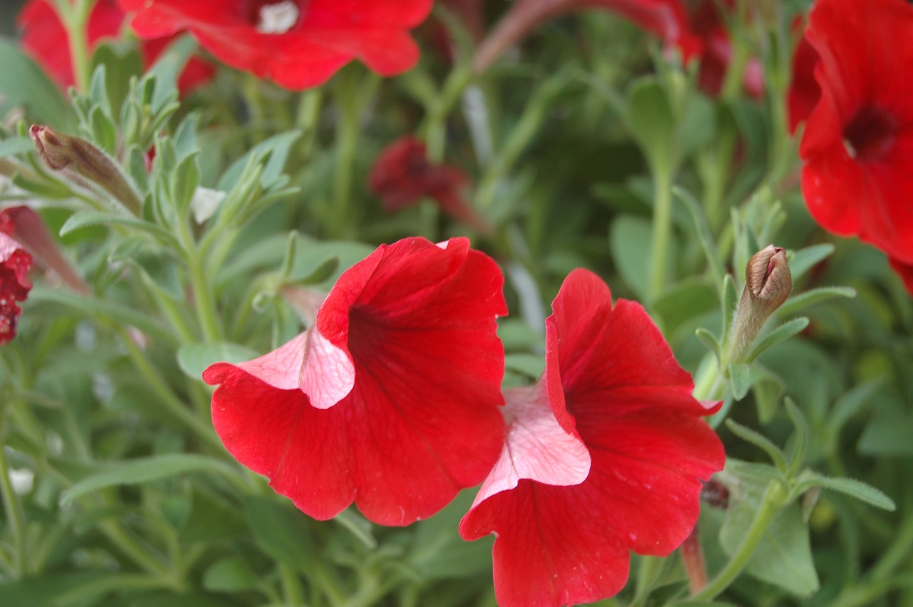 Annual vs perennial vs biennial 3 plant types you should know types of annuals izmirmasajfo