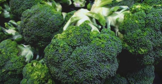 Growing Broccoli: The Complete Guide to Planting, Growing, and Harvesting Broccoli