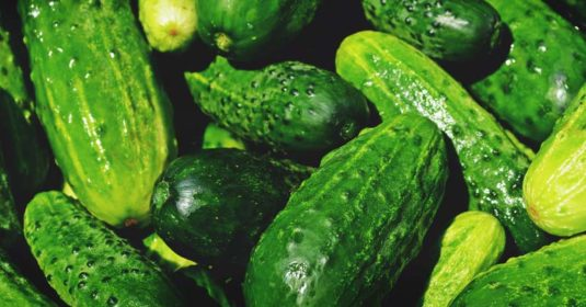 Growing Cucumbers: Your Guide to Plant, Grow, and Harvest Cucumbers