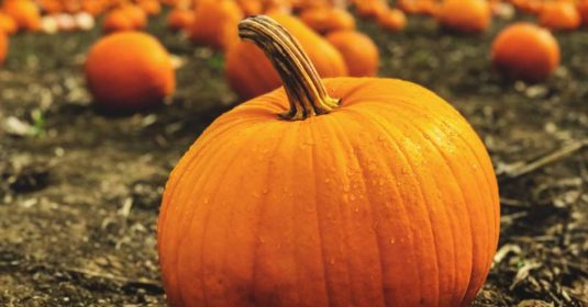 Growing Pumpkins: Your Guide to Plant, Grow, and Harvest Pumpkins