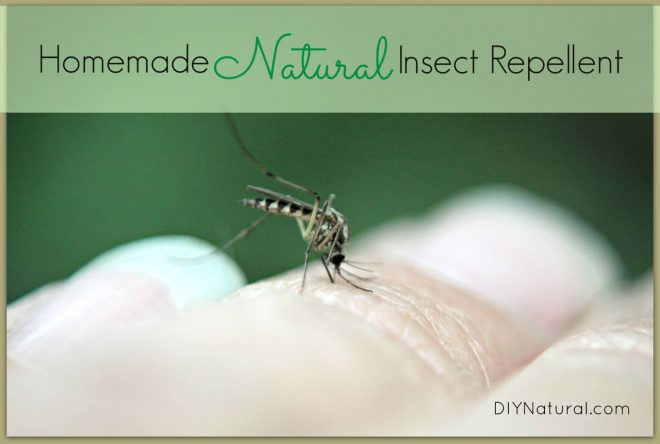 Natural Insect Repellent Spray