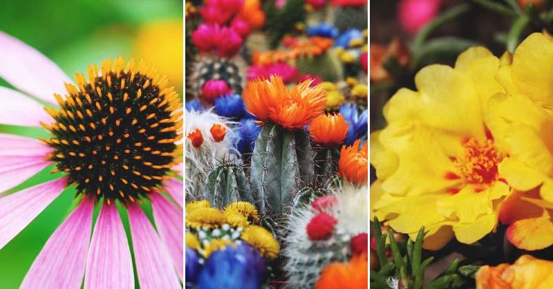 39 drought tolerant plants for a gorgeous garden even on arid zones mightylinksfo