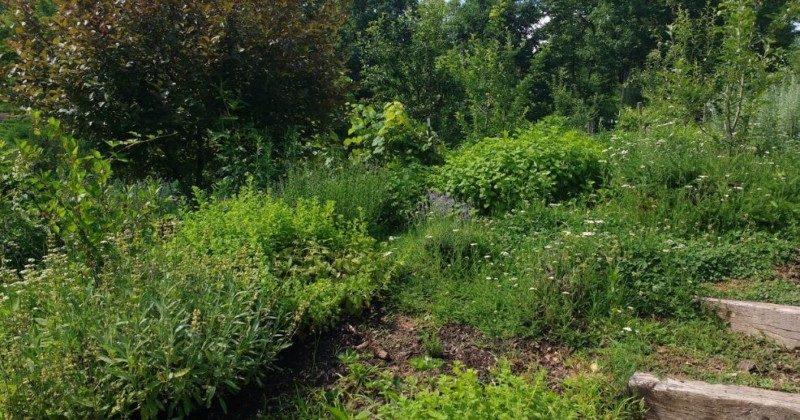 plants for propogation