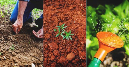 Fall Gardening: All You Need to Know to Plan & Start a Thriving Fall Garden