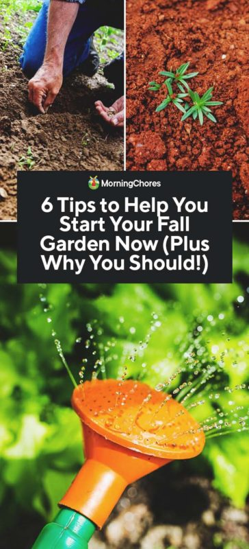 Fall Gardening: All You Need to Know to Plan & Start a Thriving Fall ...