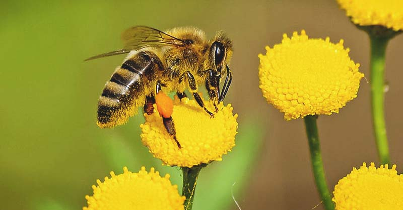 The Main 8 Tips to survival bee attack