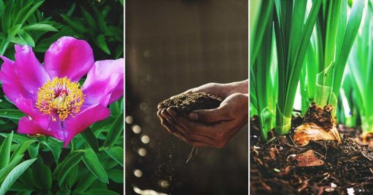 September Gardening Tips and To-Do List by Planting Zone and Region