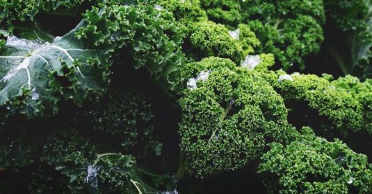 Use the Right Winter Cover Crops to Supercharge Your Spring Garden