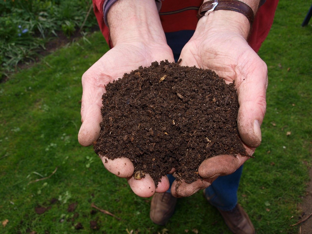 compost as part of DIY potting soil mix