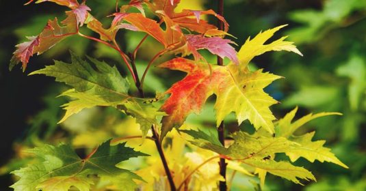 32 of the Best Fast-Growing Trees to Plant in the Fall
