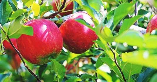8 of the Tastiest Apple Varieties and How to Make Them Thrive