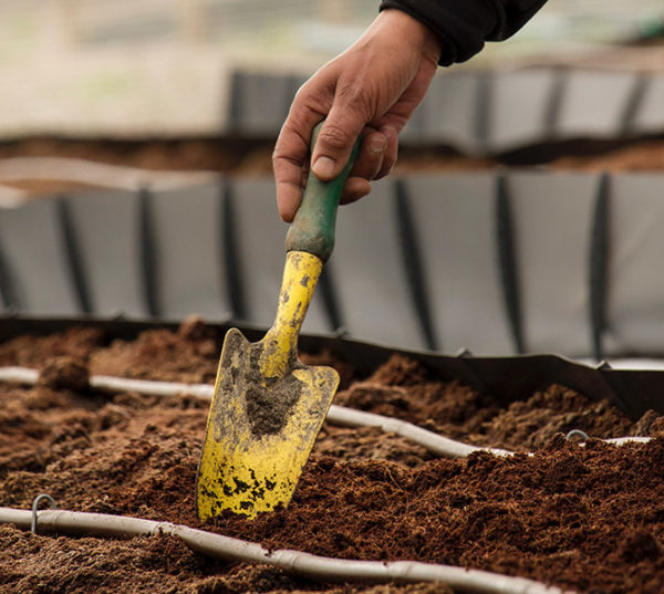 A hand holding a garden trowel to add fertilizer to soil to control garden pests