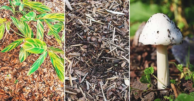 Garden Mulch: 3 Types and the Best Way to Use Them All Year Round