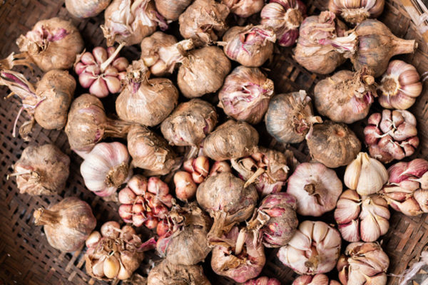Garlic bulbs in a group pictured from above