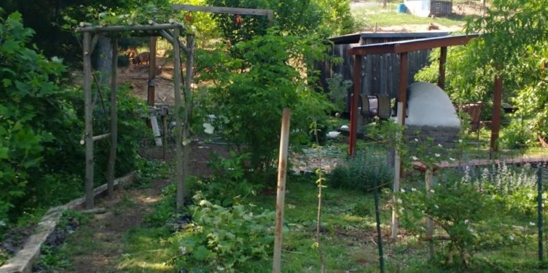 fall homestead projects