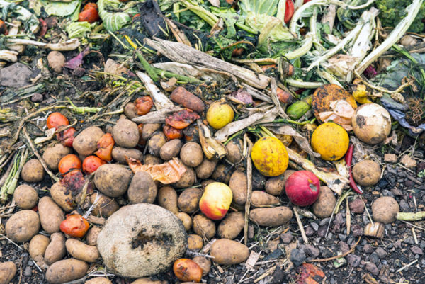 Vermicomposting fruits and vegeetables in a yard