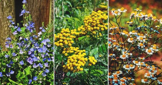 28 Medicinal Herbs You Need to Have in Your Garden