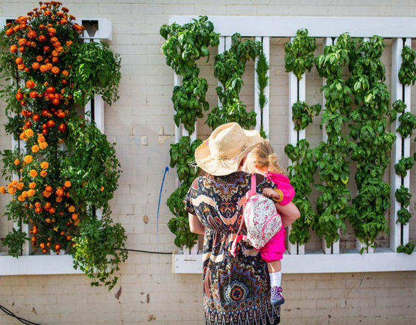 A woman looking at an Aeroponics system